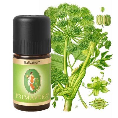 Galbanum bio Ätherisches Öl von Primavera
