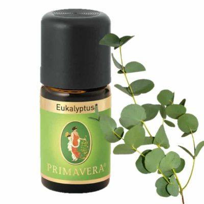 Eukalyptus globulus bio Äterisches Öl von Primavera