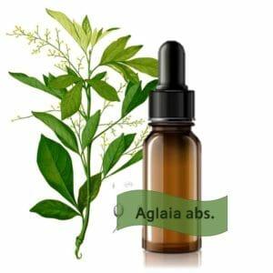 Aglaia odorata Absolue Ätherisches Öl von Maienfelser